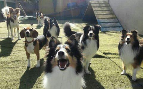 Hospede seu cão